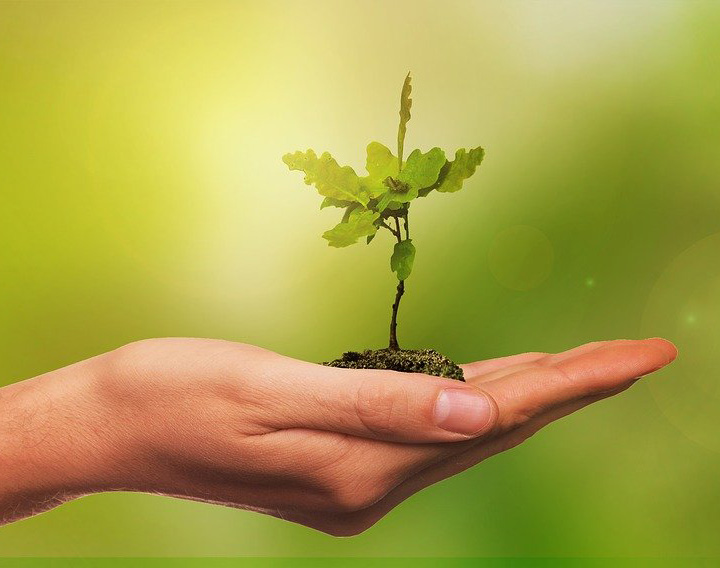 Open hand with sapling in soil