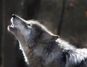 How to train your werewolf: thinking about anger