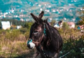 Palm Sunday: the horse and the donkey