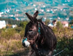 Palm Sunday: the horse and the donkey