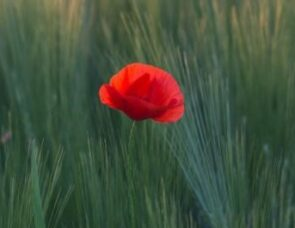 Remembering Peace