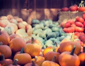 Talking about Harvest: saying thank you