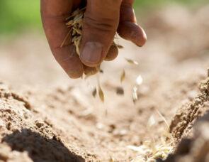 A hand picking up seeds