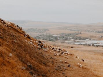 A hill with sheep on