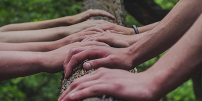Various hands on a tree trunk
